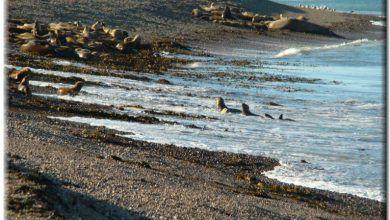 Reserva Provincial de lobos marinos en Caleta Olivia